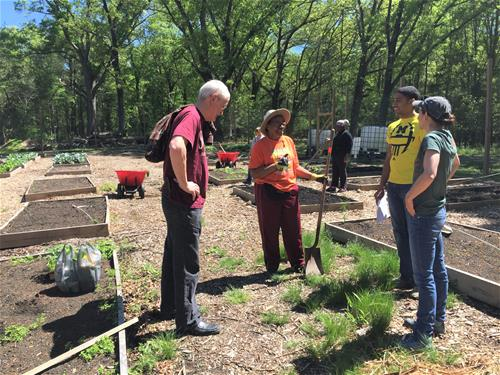 Self-Help staff volunteer at a nonprofit farm, UCAN.